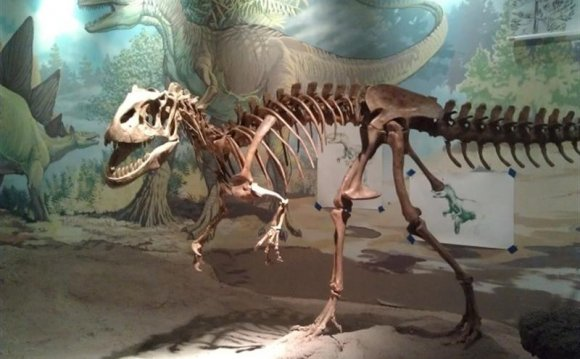 Photo of Allosaurus skeleton